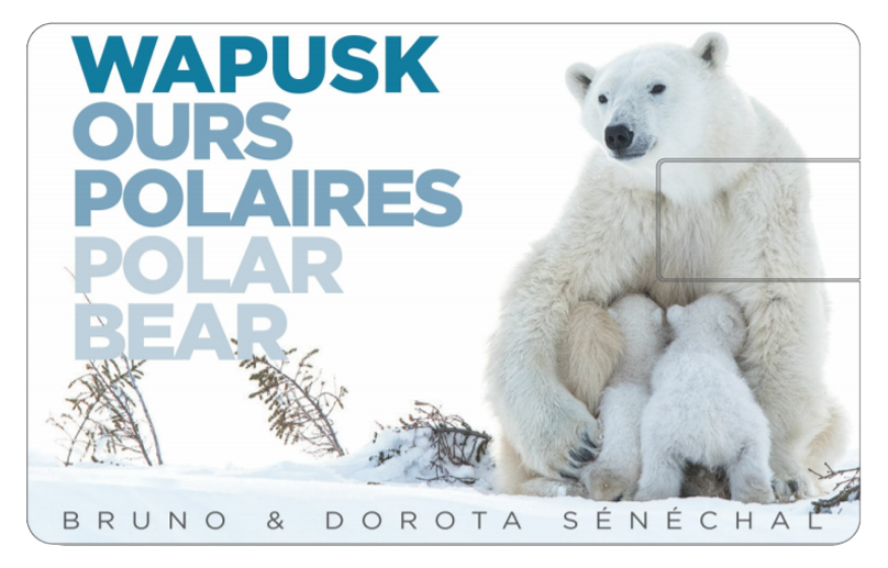 Film - Wapusk Ours polaires